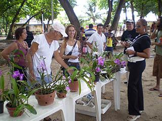 Orquídeas no Parque Rio Branco