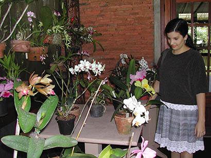 Orquídeas no Villa Lautrec