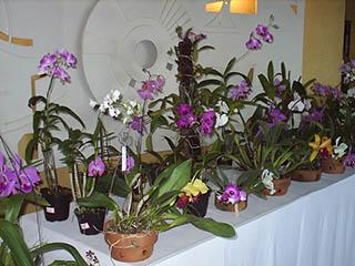 Orquídeas no SEBRAE