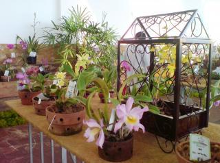 festorquideas-2007-01.JPG
