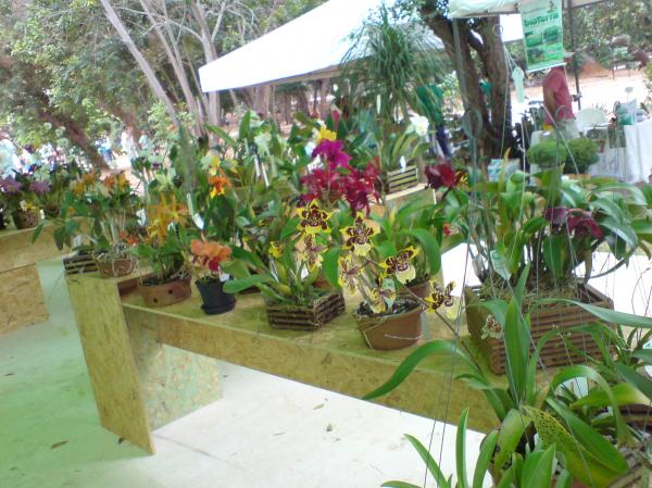 Orquídeas da Exposorn 2007