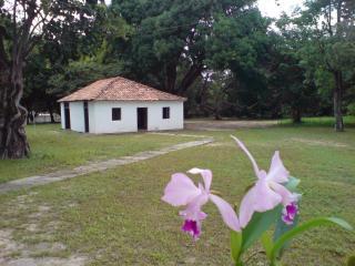 orquideas-na-cja-01.JPG