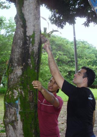 orquideas-na-cja-15.JPG