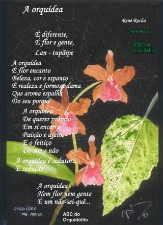 a-orquidea-poesia.jpg