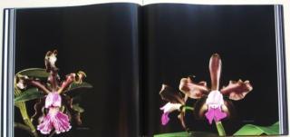 orquideas-brasileiras-03.JPG
