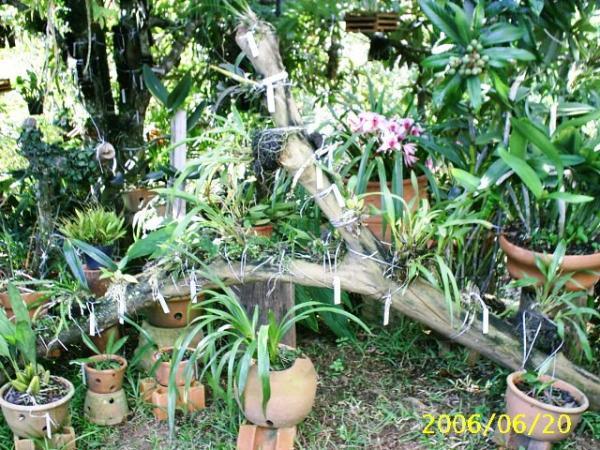 Como Montar Jardins Pequenos E Bonitos Pictures to pin on Pinterest