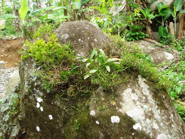 Orquídeas na Serra da Aratanha