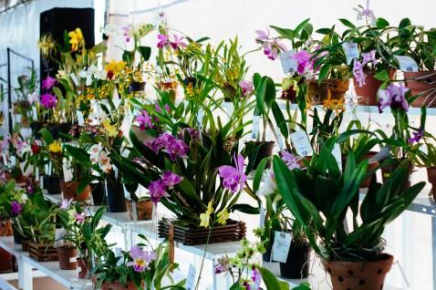 A beleza das exposições de orquídeas estará de volta à Unifor.