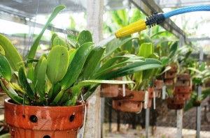 Há que regular o jato da mangueira: a ordem é evitar desperdícios. (Foto: I.Gurgel)