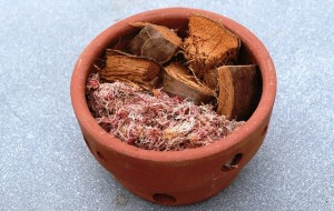Esfagno e casca de coco, duas opções de substrato para reter umidade por mais tempo. (Foto: I. Gurgel)