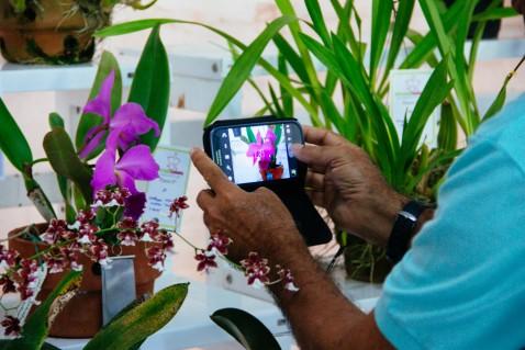 Visitante fotografa uma Cattleya labiata. (Foto: Marco Vasconcelos)