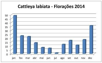 Florações labiatas 2014