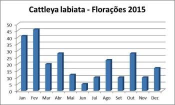 Florações labiatas 2015