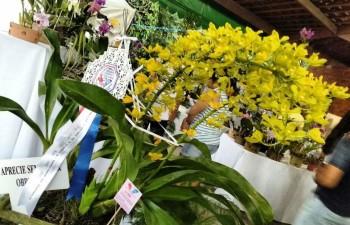 Plantas de alta qualidade agradaram ao júri e ao público.