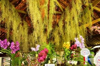 A beleza das orquídeas no pódio de Maceió.