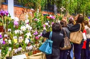 Repete-se o espetáculo das flores. (Foto: Prefeitura de R. Claro)