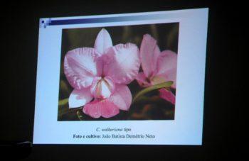 Entre as imagens que ilustraram a palestra, uma belíssima C. walkeriana do Sr. João Batista Demétrio.