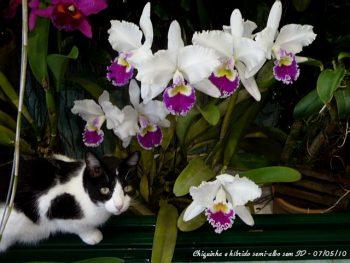 Gatos e orquídeas