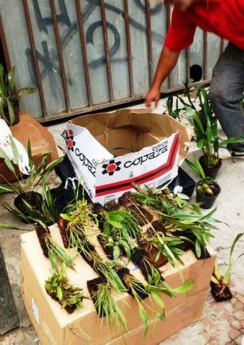 Comércio ilegal de orquídeas