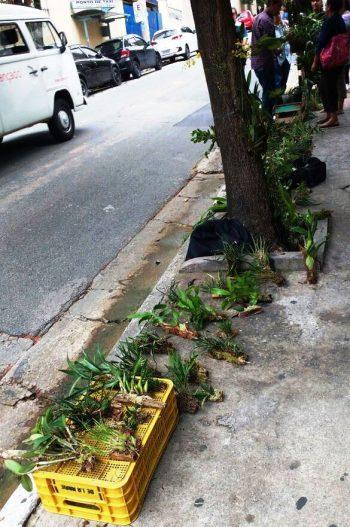 Comércio ilegal de orquídeas.