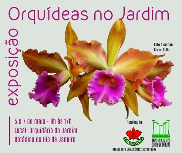 Orquídeas - Rio de Janeiro