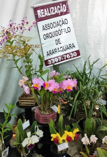 Orquídeas Araraquara